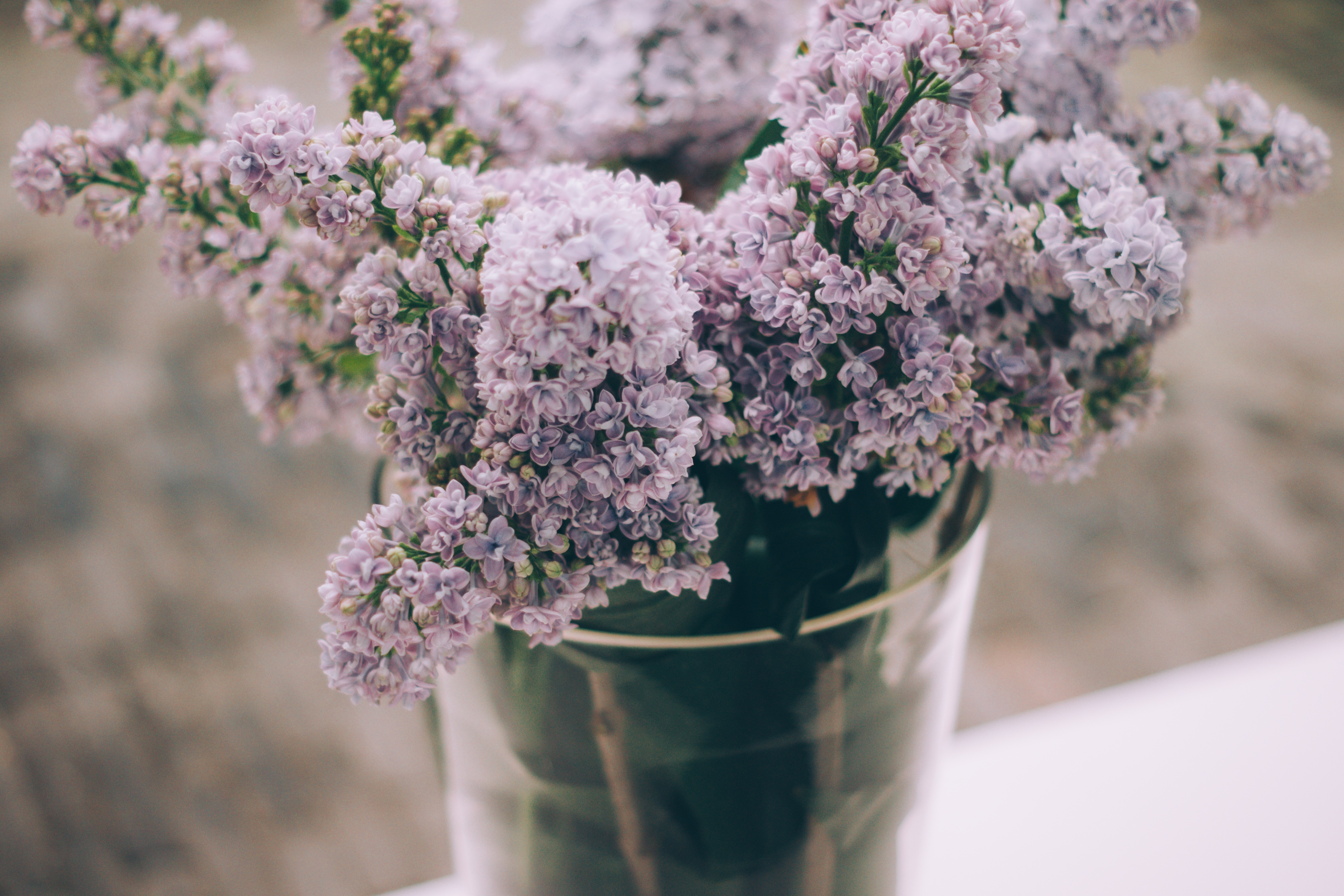 spring lilacs mission springs resort