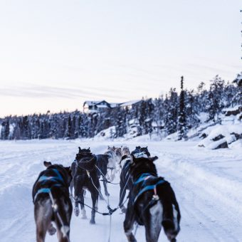 Sled Dogs Racing near a forest